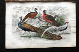 Goldsmith 1866 Hand Col Bird Print. Peacock, Ringed Pheasant, Horned Pheasant.